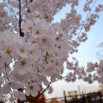 Spring! :)